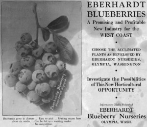 Eberhardt Blueberries sales flyer