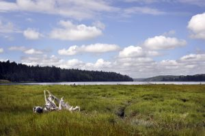 Twin Rivers Ranch Preserve on Oakland Bay in Mason County. Photo by Bonnie Liberty.