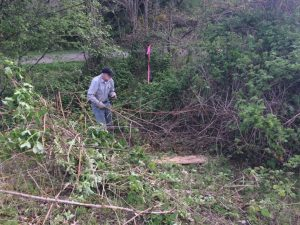 Volunteers remove invasive species (photo credit: Joanne Schuett-Hames)